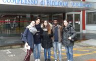 Gli alunni del Liceo Medi si classificano alla fase nazionale Olimpiadi delle Neuroscienze!